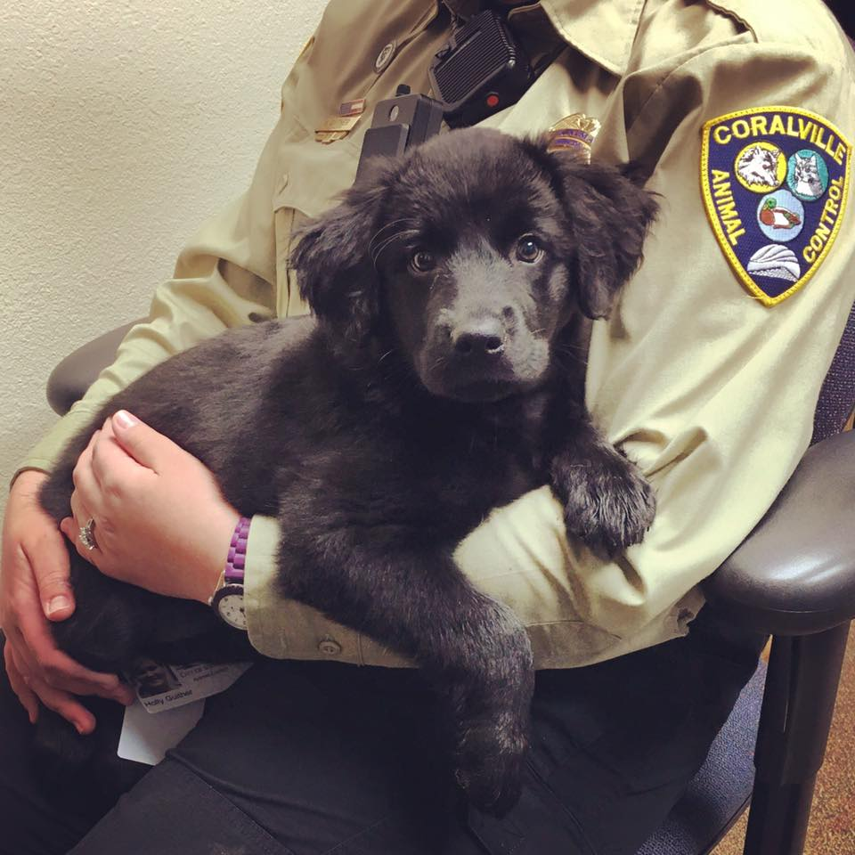 Puppy and Coralville PD